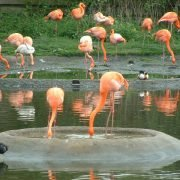 Llanelli Wetland Centre - Irish Rugby Tours, Rugby Tours To Llanelli