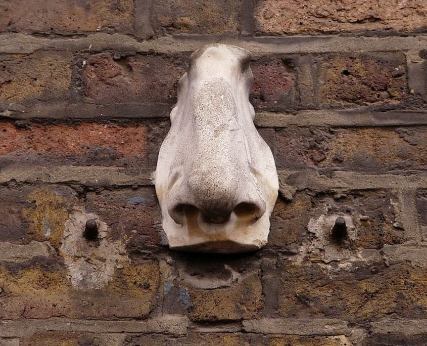 Sniff out the noses of Soho - Rugby Tours in London