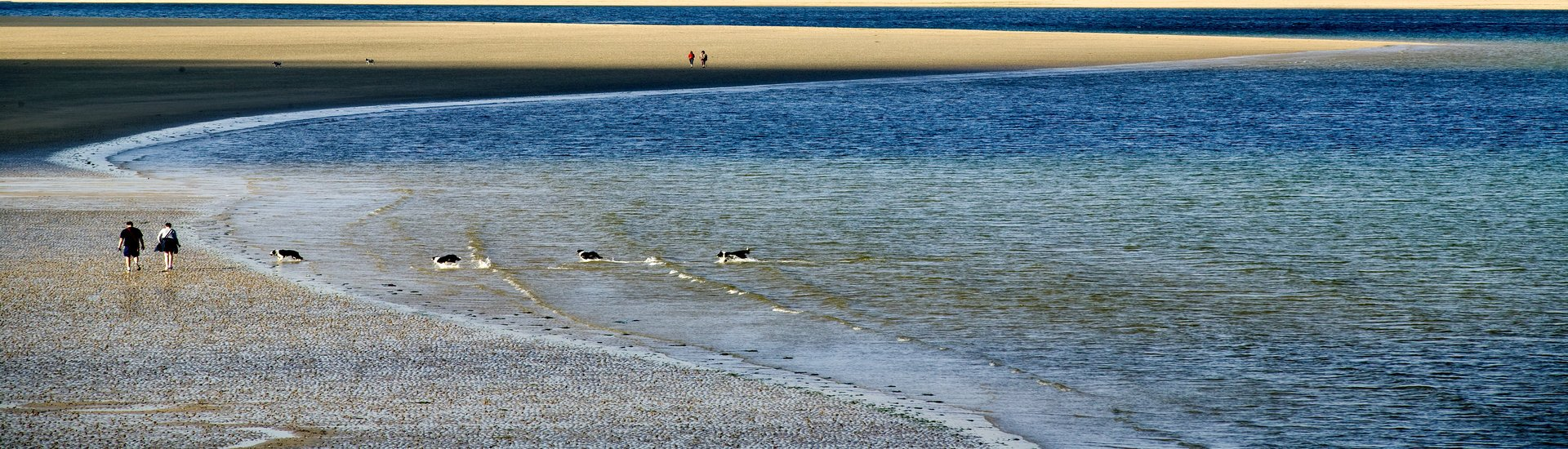A couple walk on the beach along Daymer Bay, with their four dogs playing in the water.
