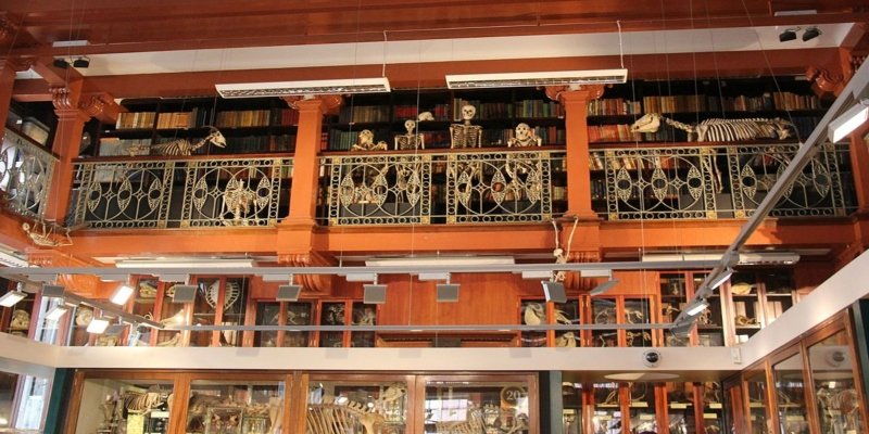 Museum of Zoology and Comparative Anatomy - Londons' Fantastic Freebies, Irish Rugby Tours