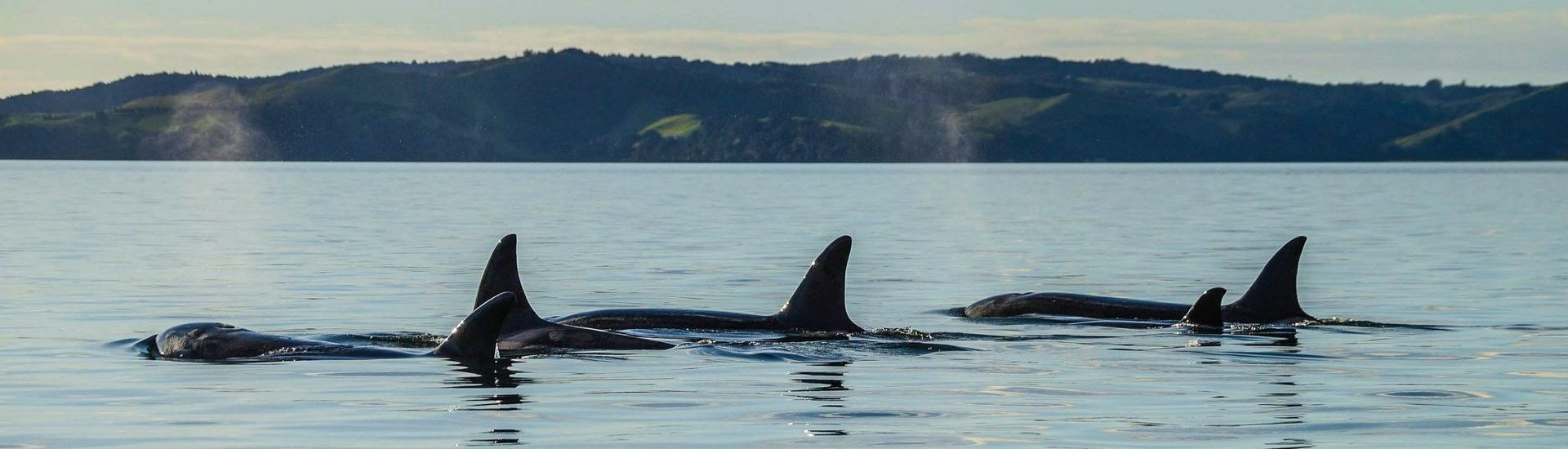 Auckland Whale & Dolphin Safari - Irish Rugby Tours, Rugby Tours To Auckland