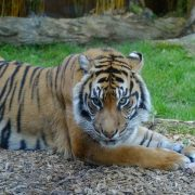 Auckland Zoo - Rugby Tours To Auckland, Irish Rugby Tours