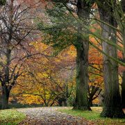 North Hagley Park - Rugby Tours To Christchurch, Irish Rugby Tours