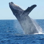 Whale & Shark Tour - Rugby Tours To South Africa, Irish Rugby Tours