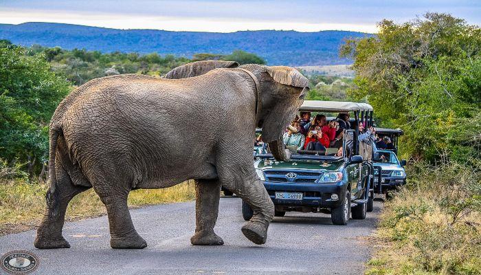 Hluhluwe Imfolozi Safari Park - Irish Rugby Tours, Rugby Tours To Durban