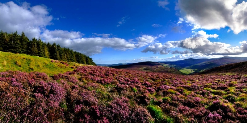 Wicklow Hills National Park